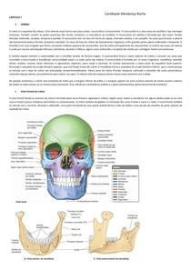 Moore capítulo 7 - Anatomia