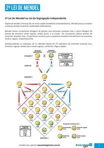 Genética - 2ª Lei de Mendel