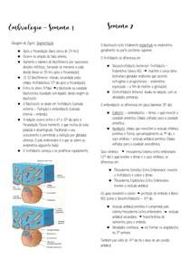 Desenvolvimento embrionário Semana 1 a 3