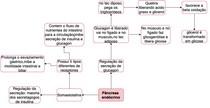 Pâncreas Endócrino (Part.3)