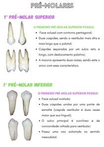 pré molares