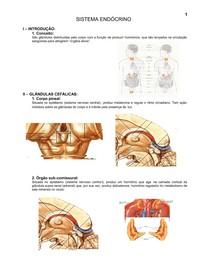 8.sistema_endocrino