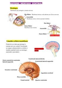 Mapa Mental - Sistema Nervoso Central