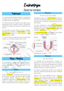 Embriologia do Sistema Urinário