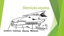 Dentição equina