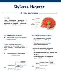 Sistema Nervoso (divisão anatômica) - Neuroanatomia