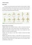 Resumo Inorgânica   Teoria de Ligação