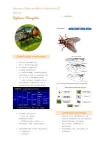 Dipteras: Mosquitos