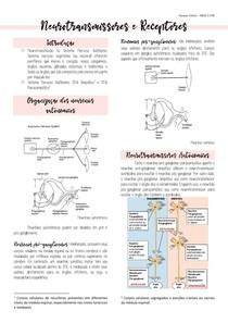 Neurotransmissores e receptores autonômicos
