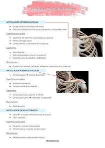 complejo articular del hombro