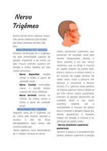 Nervo Trigêmeo - resumo