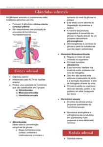 glandulas adrenais