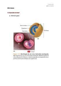 SP2 imuno