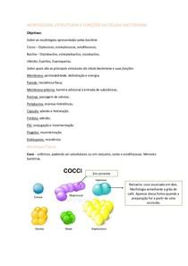Morfologia Estruturas E Funções Da Célula Bacteriana Agress