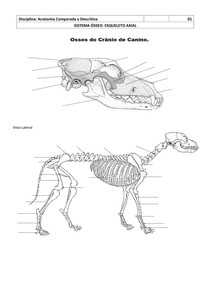 Atlas de anatomia veterinaria para colorir