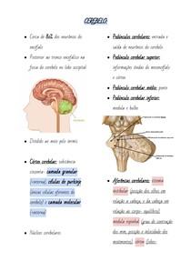 CEREBELO- Anatomia, funções e aspectos clínicos