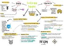 Mapa mental - Sistema Imune