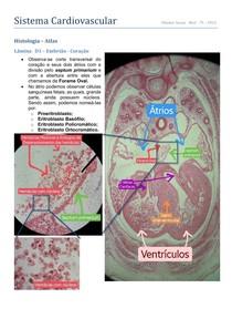 Atlas de Lâminas - Histologia Cardiovascular