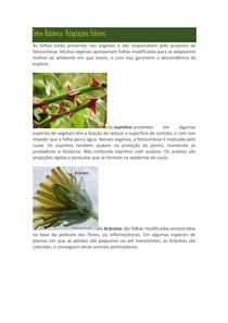 Série Botânica Adaptação foliares