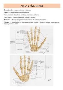 Ossos da mão e pé - Resumo
