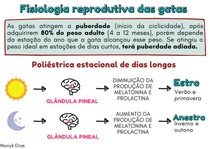 Fisiologia reprodutiva das gatas