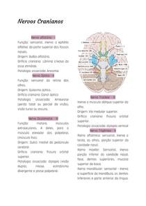 Nervos Cranianos resumo