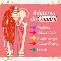 Músculos Adutores do Quadril - @biaresumosdafisio