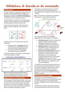 Metabolismo de degradação dos aminoácidos