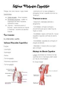 Sistema Muscular Esquelético