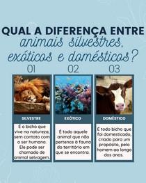 diferenças entre animais silvestres, exóticos e domésticos
