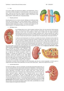 Anatomia clínica do sistema urinário
