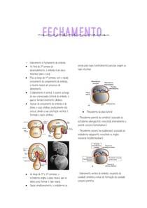 Fechamento do embrião