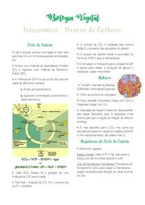 Resumo Fixação do Carbono - Biologia Vegetal