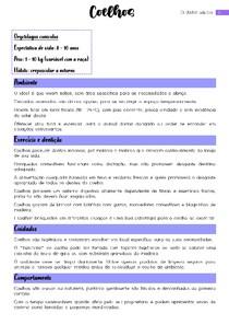 Cuidados Básicos: Coelho