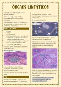 Histologia dos Órgãos Linfáticos