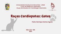 Raças Cardiopatas- Gatos
