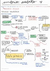 Embriologia do palato