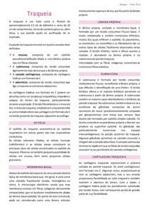 Resumo_Traqueia