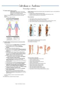 Introdução a Anatomia, Posições, Planos, Sistemas e Termos anatômicos