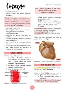 [ANATOMIA] Sistema Circulatório | @queroresumo_