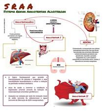 SRAA - Sistema Renina Angiotensina Aldosterona.pdf