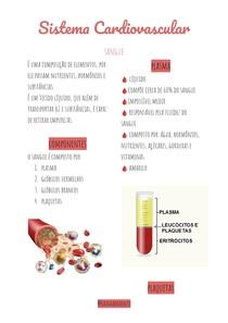 Sistema cardiovascular - sangue