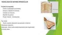 Sistema osseo - Diagnóstico por imagem