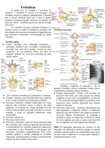 Anatomia das Vértebras cervicais e Ligamentos