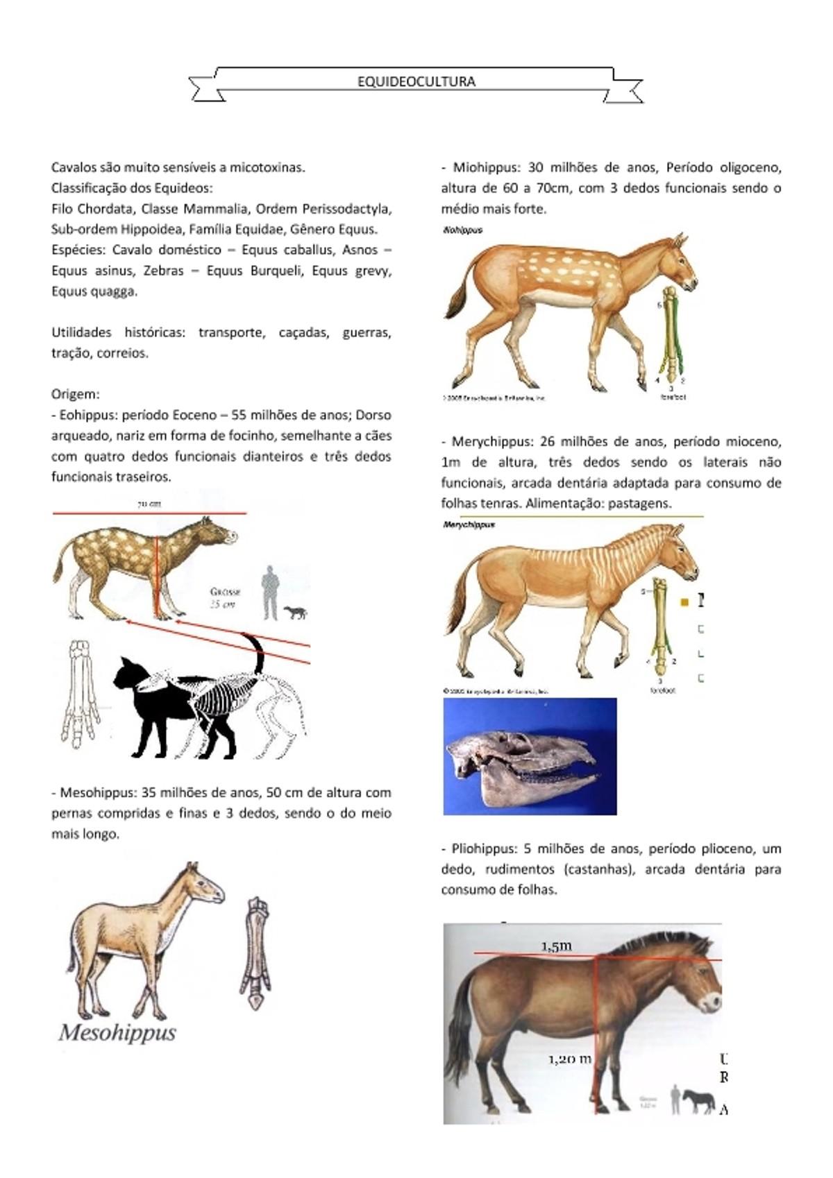 Pre-visualização do material Cavalos - EQUIDEOCULTURA 1 - página 1