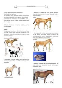 Cavalos - EQUIDEOCULTURA 1