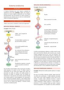 Sistema endócrino - fisiologia humana