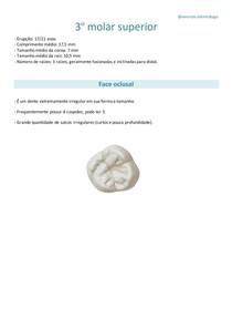 3º molar superior