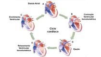 ciclo cardíaco 2