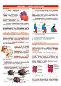 Embriologia do SCV